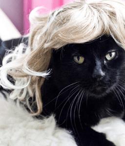どんな猫もグラマラスガールに大変身! - Kitty Wigs -