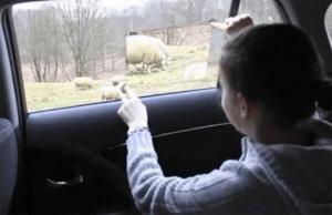 車外の世界を楽しむことができる未来の窓 - Toyota Window -