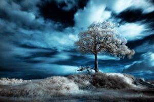 人類滅亡後のような写真の数々 - Infrared Photography -