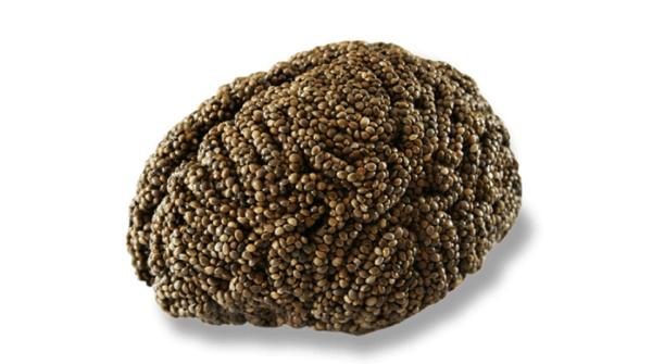Hyper-Realistic Edible Brains