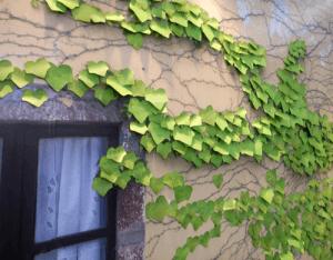 木の葉にメモするかわいい付箋 - Appree Leaf It Stickies -