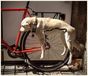 犬の脱力感が溢れ出る自転車用ラック - Fairdale Dograck -