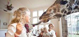 キリンが訪ねてくるとてもユニークなホテル - Giraffe Manor -
