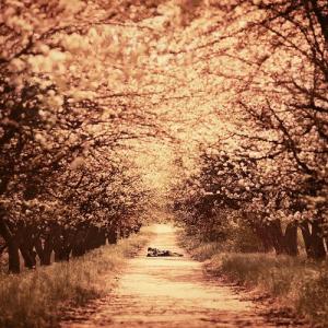 大切な人と歩きたい。恋をしたくなるような並木道 - Tree lined street -