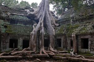 この木なんの木?地球上で最も奇妙な木 - 10 Weirdest Trees On Earth -