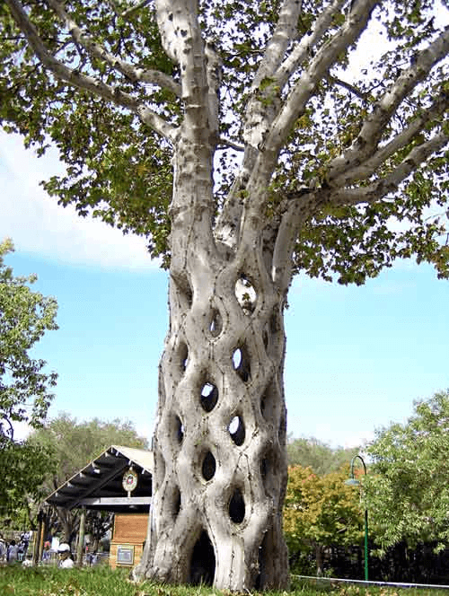 10 Weirdest Trees On Earth