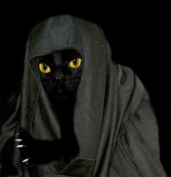 11-animals-that-are-secretly-jedi