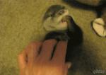 くすぐられて身悶える動物が可愛いすぎて癒される - Tickle