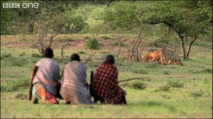ライオン15匹が食べている肉を男3人で奪いにいく方法 - sabanna -