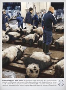 漁師に釣り上げられたパンダたち - Tuna -