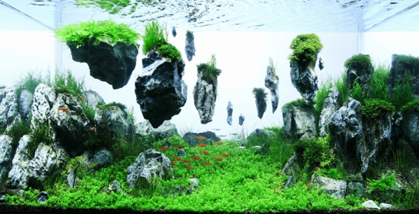 The International Aquatic Plants Layout Contest 2012