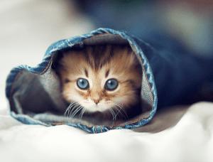 本当にかわいい!世界一かわいいと称された子猫 - The Cutest Little Kitten in the World -