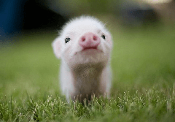Cutest Baby Animals in the Worlds