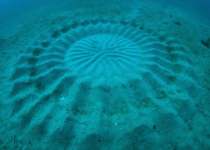 神秘的!海の底に作られた愛のミステリーサークル - The Deep Sea Mystery Circle -