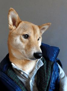 髪型だけじゃない!服装も大事!イケメンすぎる男性ファッションモデル犬 - Menswear Dog -