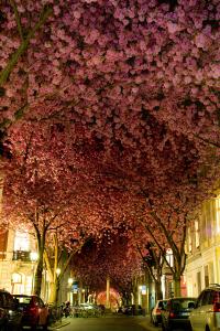 こんな桜のトンネル歩きたい!美しすぎる世界の桜並木から - The Most Beautiful Cherry Blossoms Around the World