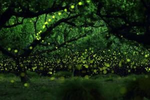 幻想的すぎる!魔法のように無数に輝くホタルの光  - Magical Long Exposure Photos of Fireflies in Japan