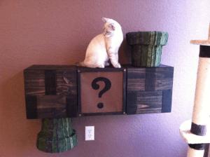猫も興味津々!土管ワープができるスーパーマリオな3BDKの猫ハウス - Super Mario cat complex