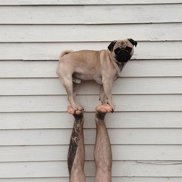 Pug Norm