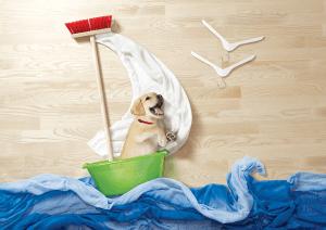 可愛すぎてやばい!愛くるしい子猫と子犬の大冒険 - Puppy kitten life is adventure