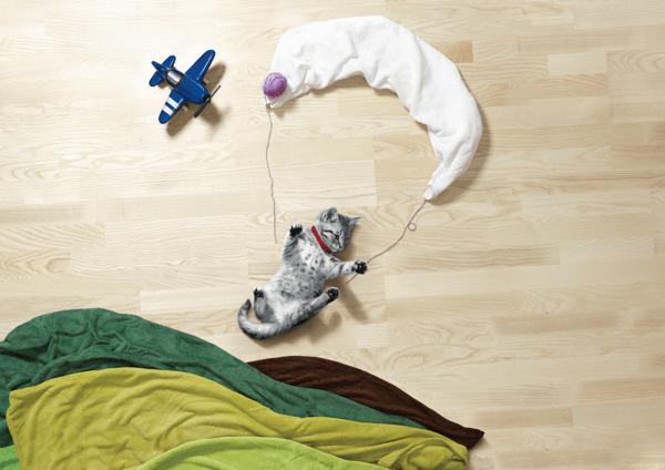 Puppy kitten life is adventure