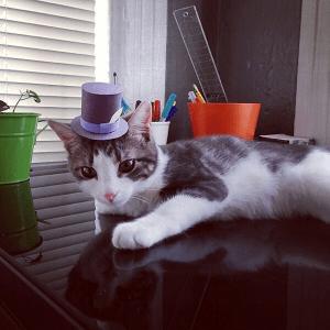 似合っていてすごいカワイイ! 3本足の子猫と小さな帽子 - Three-legged Cat in Tiny Hats