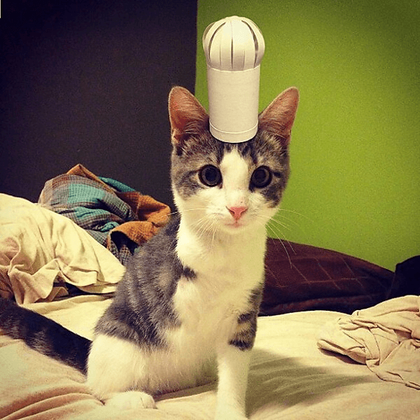 Three-legged Cat in Tiny Hats