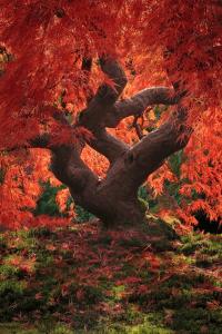もうそんな季節なのですね。日本庭園に一足早く訪れた美しすぎる紅葉 - Fall Trees Exploding with Color