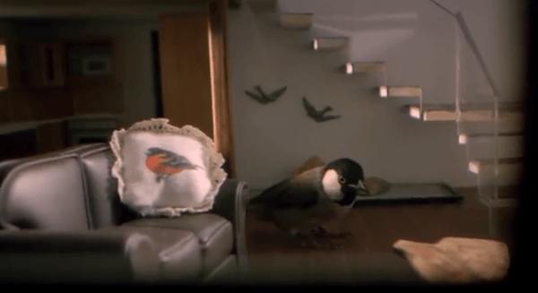 Birdbnb