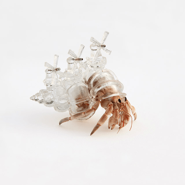 これは贅沢!3Dプリントされた美しすぎるヤドカリの家 - 3D Printed Hermit Crab Shell