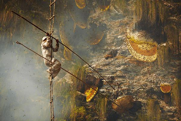 プーさんもビックリ!壮絶過ぎる断崖絶壁のハニーハント - Honey Hunting in Nepal