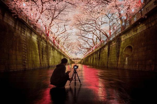 こんな場所でお花見したかった。今年最も美しかった桜の写真 - Cherry Blossom 2014