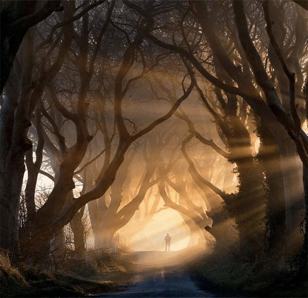 まるでおとぎ話の世界。歩いてみたくなる最も美しい並木のトンネル - 20 Most Dreamy Tunnels
