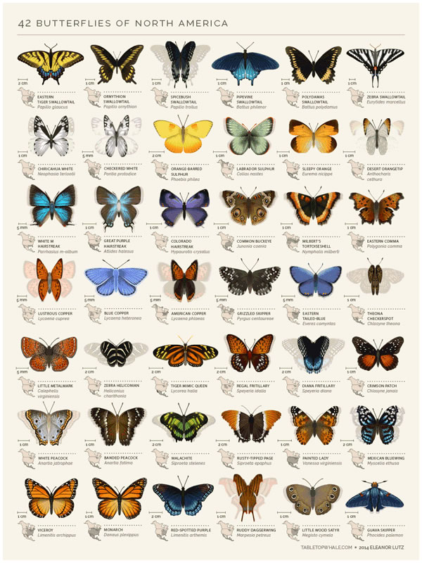 42 Butterflies of North America