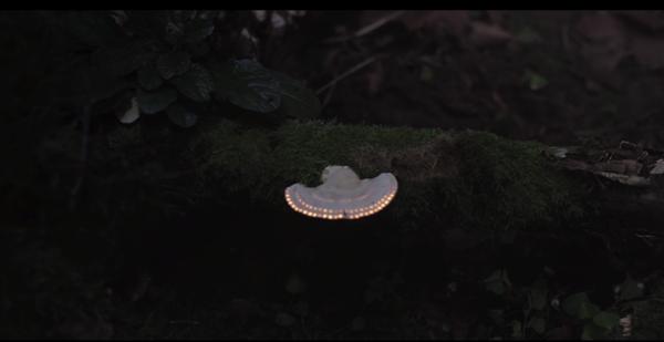発光が幻想的! 森に新たな生命を吹き込むプロジェクションマッピング