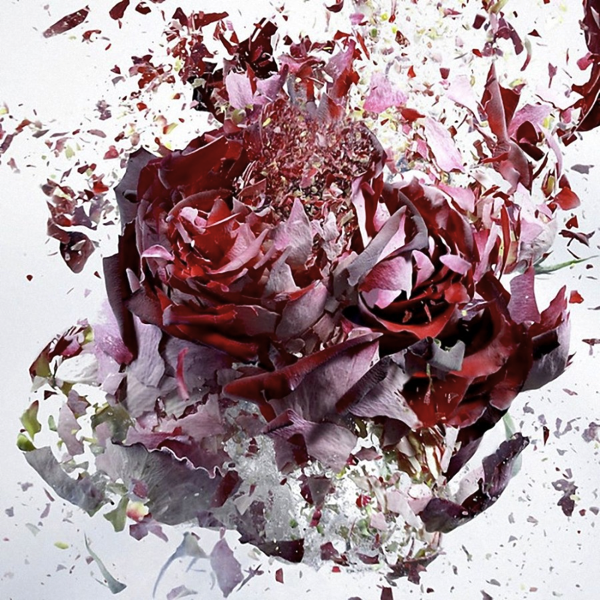 Flower Explosion photograph