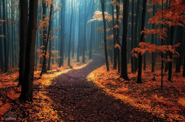 迷い込んでしまいたい。ミステリアスな魅力がプンプン漂う森