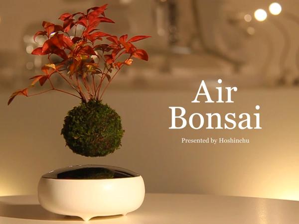 星の王子さまがいそうな盆栽!宙に浮いてる不思議な「Air Bonsai」