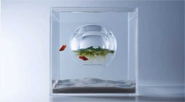 Upside-Down Fish Tank