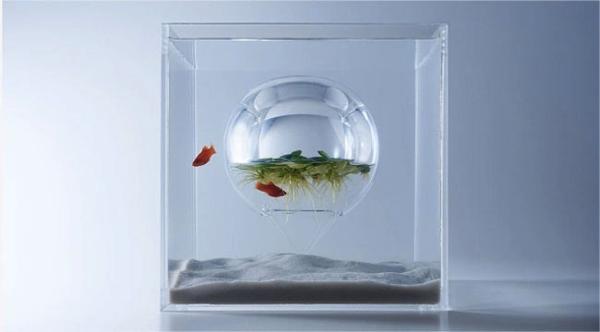 水中の中に水面?!上下逆さまの金魚鉢がはいった少し不思議な水槽