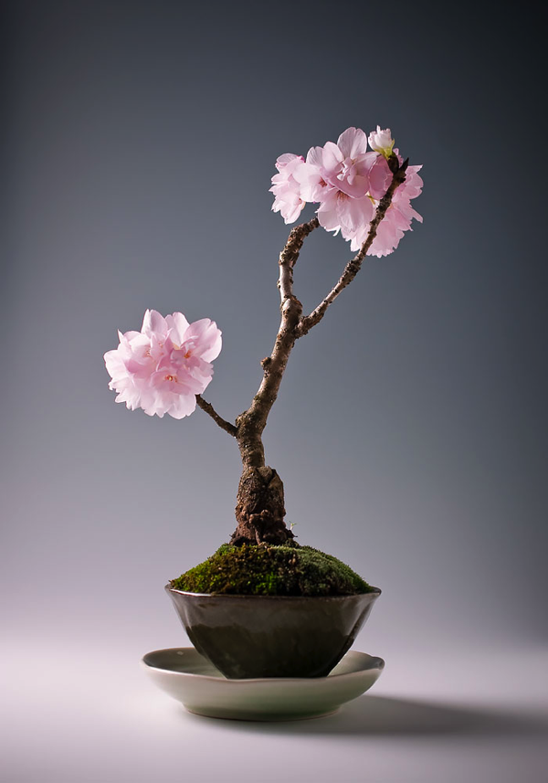 Most Beautiful Bonsai Trees