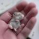 抱きしめたくなる!キュートすぎる生まれたばかりの赤ちゃん動物たち - Cutest Baby Animals in the World -