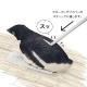 フローリングがスケートリンクになる!床を滑ってキレイにしてくれるペンギンスルスルー