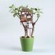 観葉植物とツリーハウスの組み合わせがファンタジーすぎる