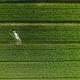 ドローンは見た!空から撮った2015年ベストフォト10
